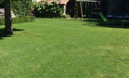 lawn-and-green-house
